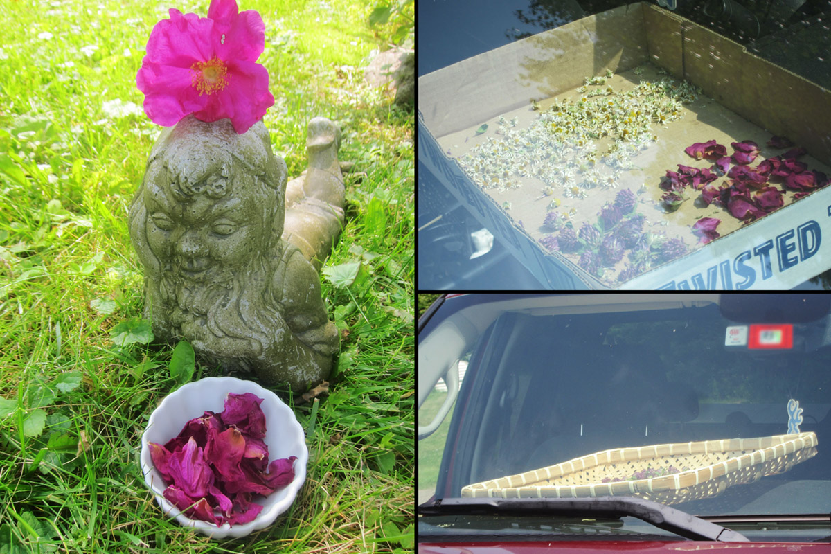 Drying herbs in your car roses collage