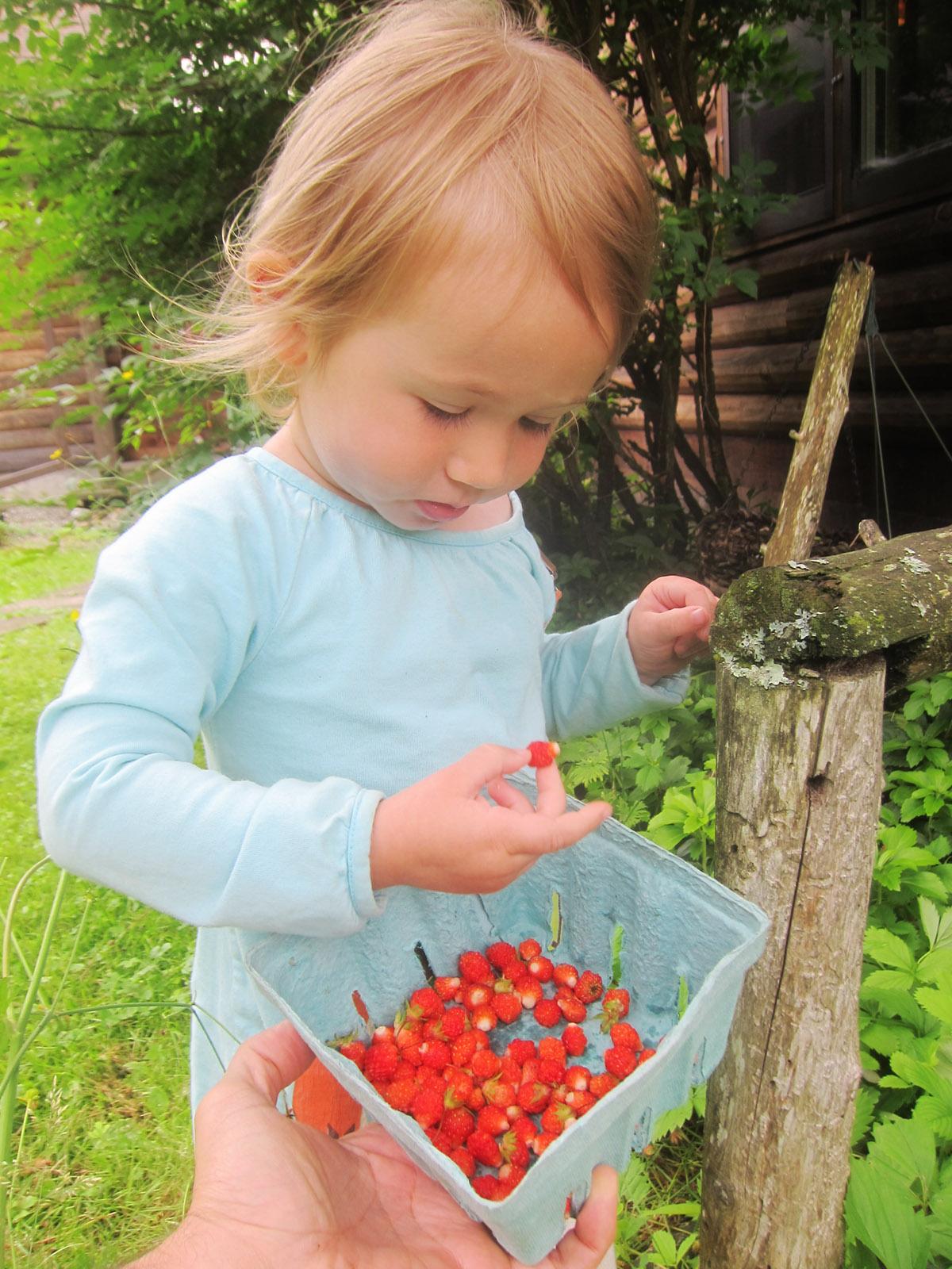 Alba Eating wild strawberries