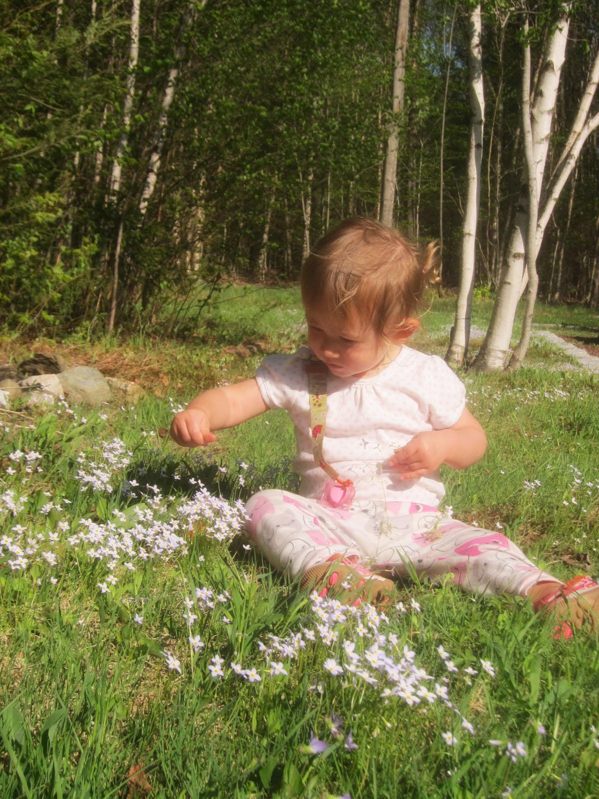 Fairy Flowers Alba