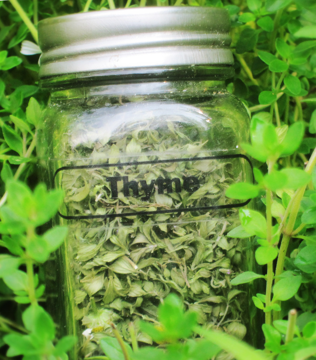 Drying herbs in your car thyme in jar